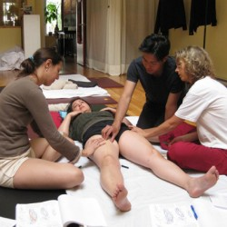 Anatomy & Physiology for Thai Massage and Yoga Practitioners - Level 2 (English )